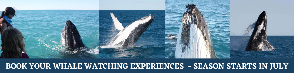 Book your 2021 Whale Watching experiences with Visit Broome